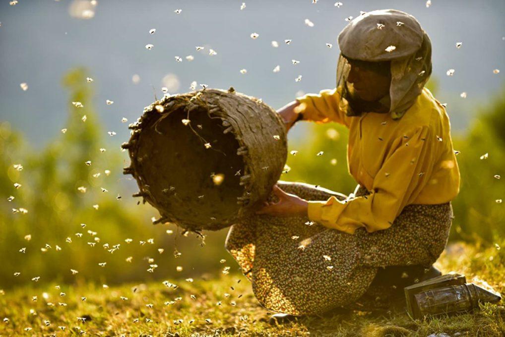 Страна мёда, документальные фильмы